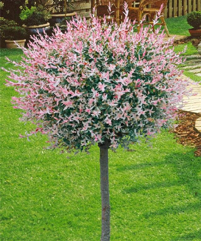 Vente de v g taux arbres arbustes vivaces destockage for Vente plantes arbustes