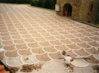 Pavés granit du Portugal