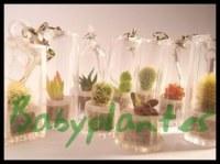 Babyplante Cactus - un bijoux vert et écolo
