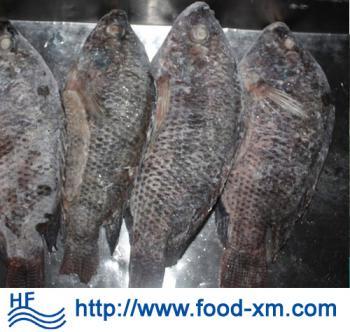Fournisseur chinois de poisson congel destockage grossiste - Cuisiner poisson congele ...