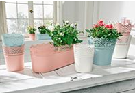 Lot de pots a fleurs