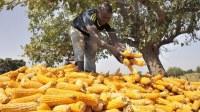 Vente de tous les produits agricoles