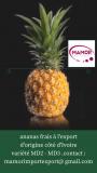 Mangue frais a exporte