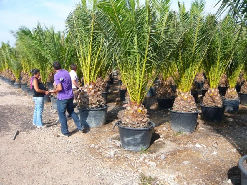 Camion plantes med destock cfd destockage grossiste for Destockage plantes