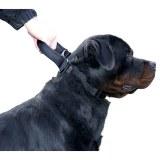 Collier pour chien et chat