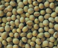 Soja grain OGM grade # 2