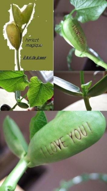 Plante un haricot magique pour obtenir son coeur for Destockage plantes