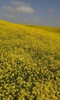 Vente en gros huiles essentielles naturelles aromatiques et médicinales