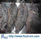 Fournisseur chinois de poisson congelé