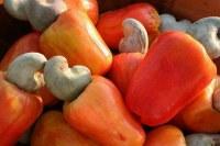 Vente de noix de cajou au BENIN