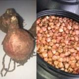 Oignon Sauvage - LAMPASCIONI (saumure et fraîche)
