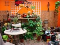 Vend stock magasin de fleurs et décoration