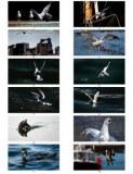 Lot Cartes postales artistiques