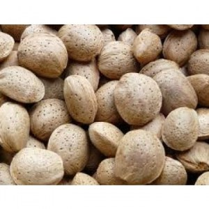 Amandes coques variete marcona 1ª cuality