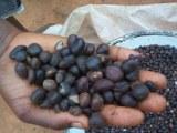 Vente d'huiles d'amande et amande