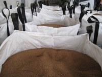 Grignon épuisé biomasse