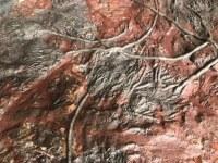 Plaque de fossile de crinoïde