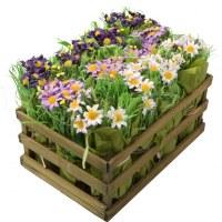 Carton de 4 - Cagette de 12 bouquets de pâquerettes