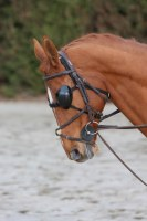PROTECTIONS OCULAIRES CHEVAUX