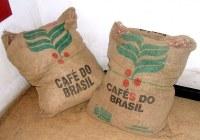 Café arabica ou robusta grain torréfaction artisanale