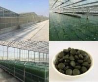 Producteur de spiruline et chlorella certifiée bio