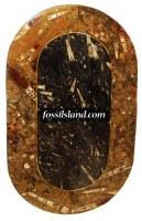 Table basse en Pierre d'erfoud riche en fossiles