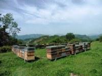 Grossiste de miel