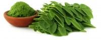 Grossiste exportateur de graines de moringa et feuilles de moringa entières ou en poudre